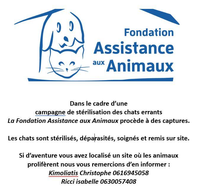 Campagne de stérilisation des chats errants avec la Fondation Assistance aux Animaux